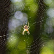 Stock Photo: Translucent spider