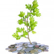 Green plant and money — Stock Photo