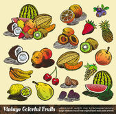 Vintage Colorful Fruits Collection — Stock Vector