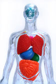 Insan vücudu — Stok fotoğraf