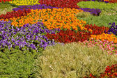 Nursery Potted Garden Plants Arrangement — Stock Photo