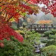 Japanese Maple Trees by the Bridge in Fall - Stock Photo