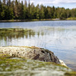Landscape of Finnish Lake — Stock Photo