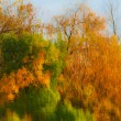 Стоковое фото: Reflection in water Autumn trees