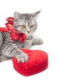 Isolated grey cat with red bow and heart — Stock Photo
