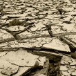Stock Photo: Dried mud and river silt following huge floods Queensland