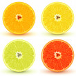 thumbnail of Citrus fruits