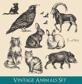 Retro / vintage graphics animals set - raven cats flying birds rabbits boar goat