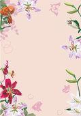 Liliom virágok illusztráció a pink keret