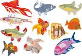 Elf Farbe-Fische