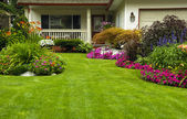 Manicured green Yard