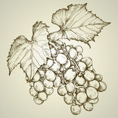 Banda grapevine