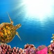 thumbnail of Sea turtle sunburst
