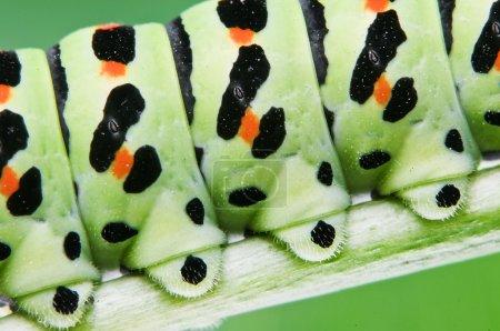 韩国larva头像