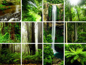 Rainforest Montage