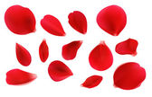 Beautiful red rose petals in vector Petals are on separate layer easy to edit and recolour Can be used for creating postcards wedding albums etc