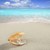 Karibská Perla na tropické pláži s bílým pískem shell