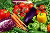 Auswahl an frischem gemüse