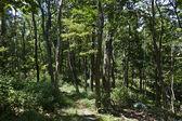 Beautiful fern in dense forest