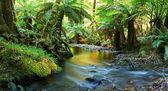 Regenwald Fluss panorama