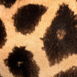 thumbnail of Authentic animal wool texture