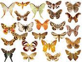 Kolekce barevných motýlů