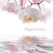 Cartolina. orchidee bianche sullacqua