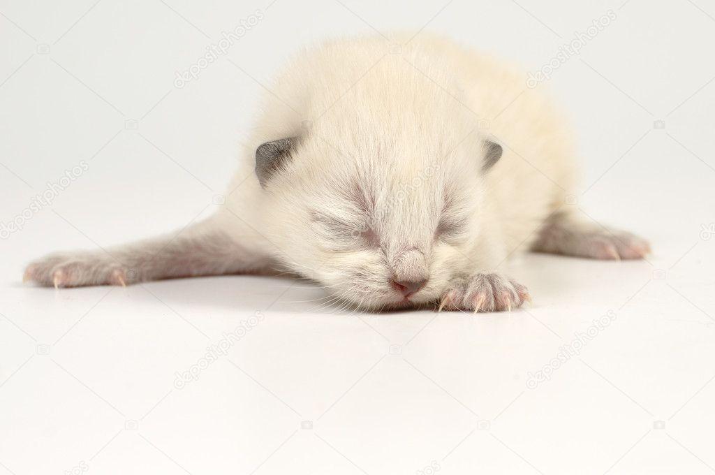 gatito recién nacido ciego — Fotos de Stock © Cherry-Merry #6670102