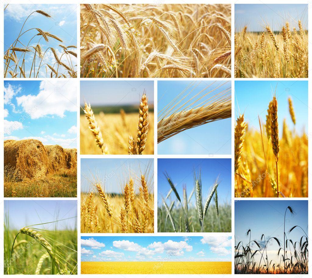 Harvest concepts