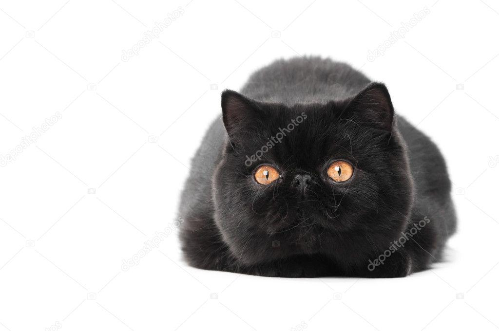 Pblack kočička