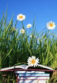 Fotografie letní čtení