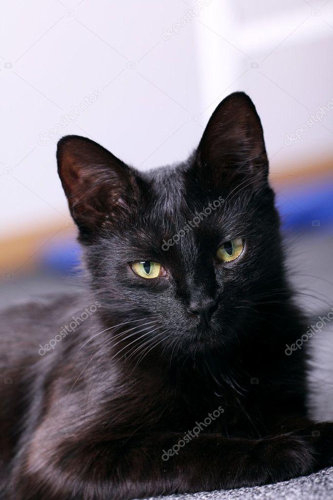 noir lécher la chatte noire BBW gratuit image porno