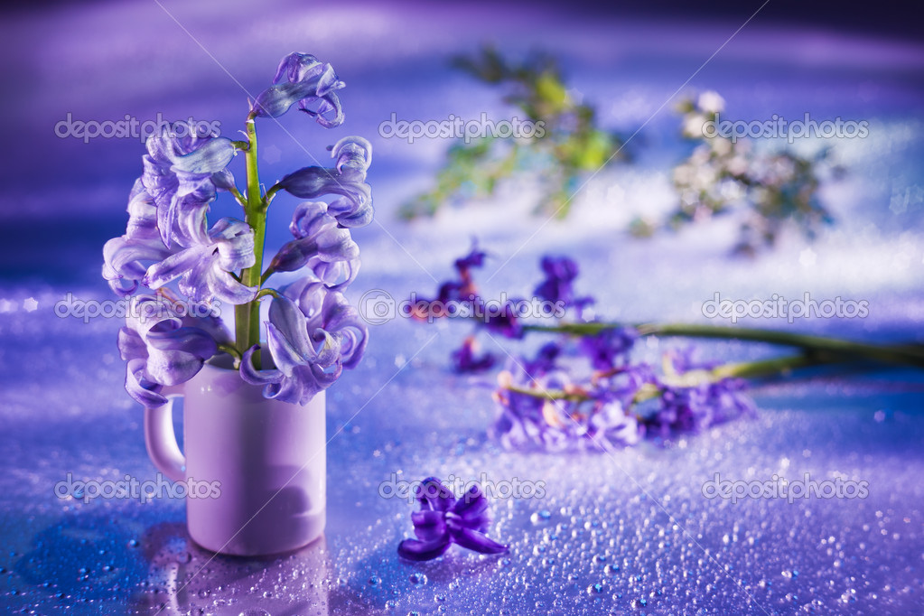 Still life with hyacinth flower in gentle violet colors and magi