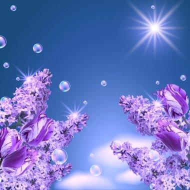Lilac, tulip and mamgnolia
