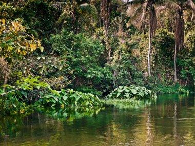 "Картина, постер, плакат, фотообои ""тропический пейзаж "", артикул 5586720"