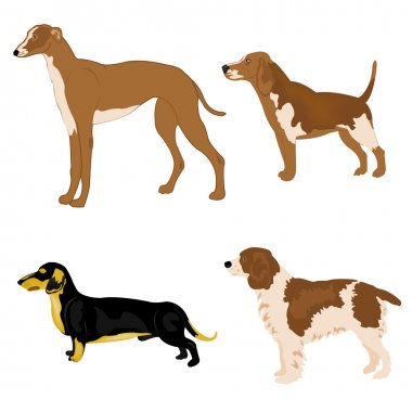 Dogs of the varied sorts
