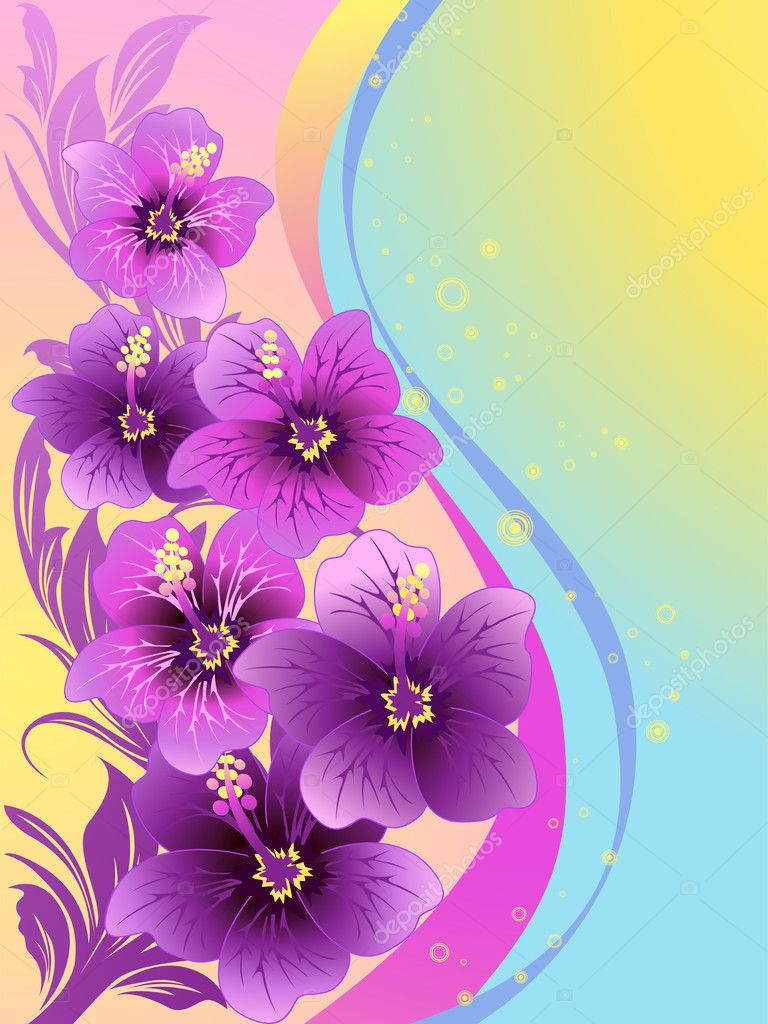Hibiscus flowers, tropical illustration, vector