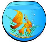 Aquarium mit gold Fisch und Algen