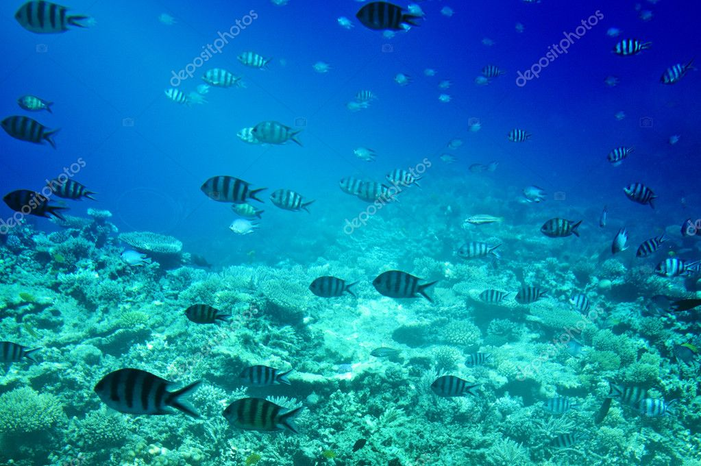 Colorful corals, fishes of Red Sea. Egypt.