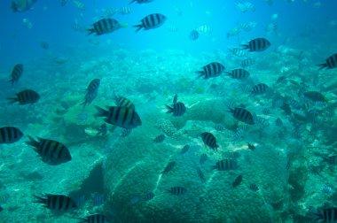 Astonishing undersea world of Red sea.