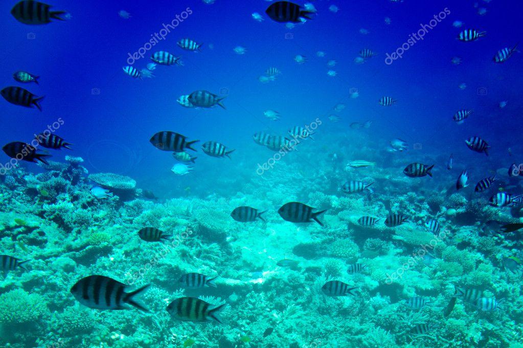 Underwater landscape of Red sea.