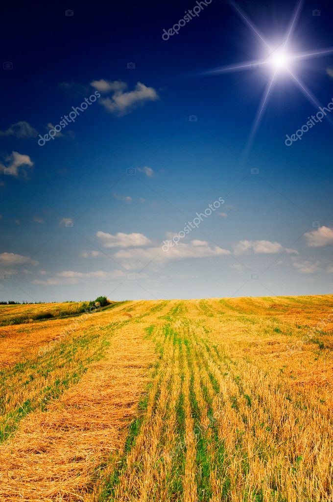 Harvest Of Wheat And Stubble By Summertime Stock Photo
