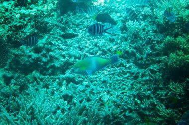 Unforgettable underwater landscape of Red sea.