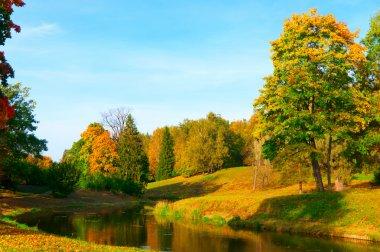 "Картина, постер, плакат, фотообои ""красивый осенний парк цветы"", артикул 6480593"