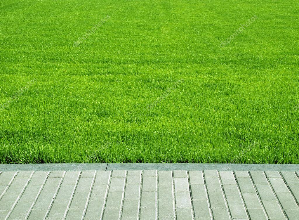 Lawn, grass plot