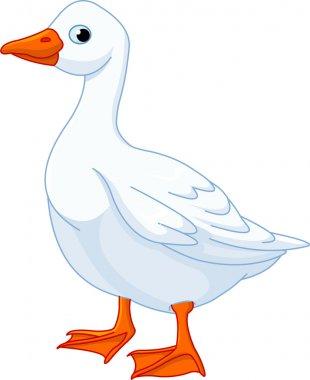 White domestic goose