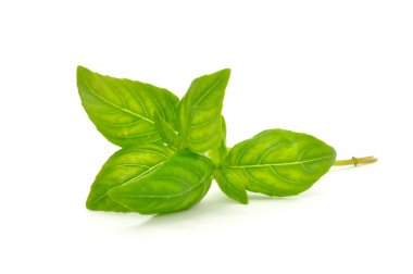 Fresh Green Basil Isolated on White Background