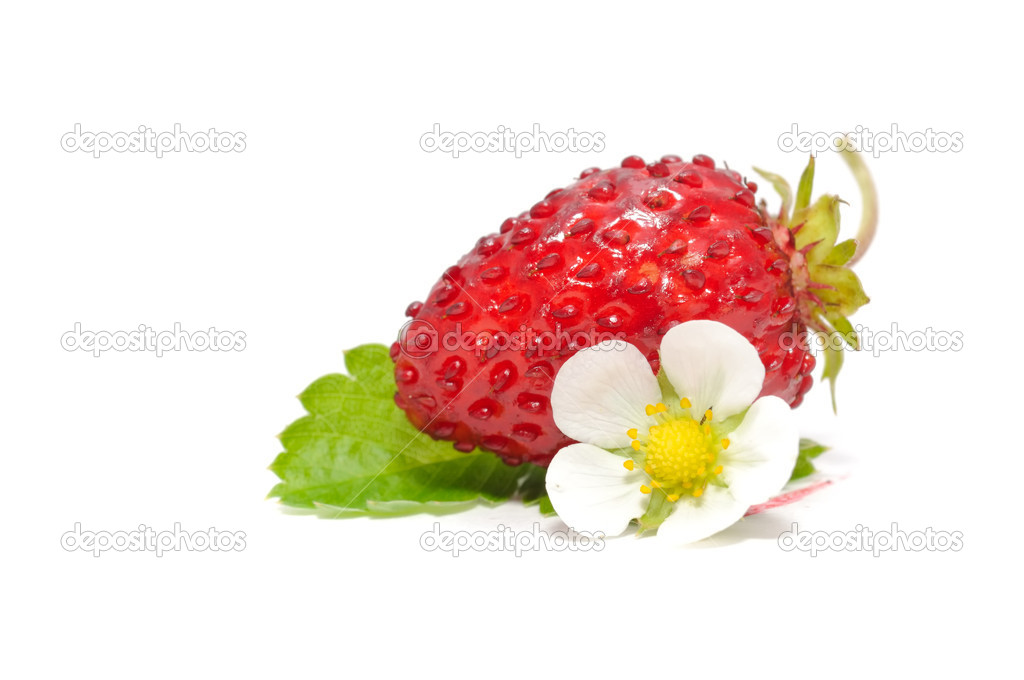 Wild Strawberry with Flower and Leaf