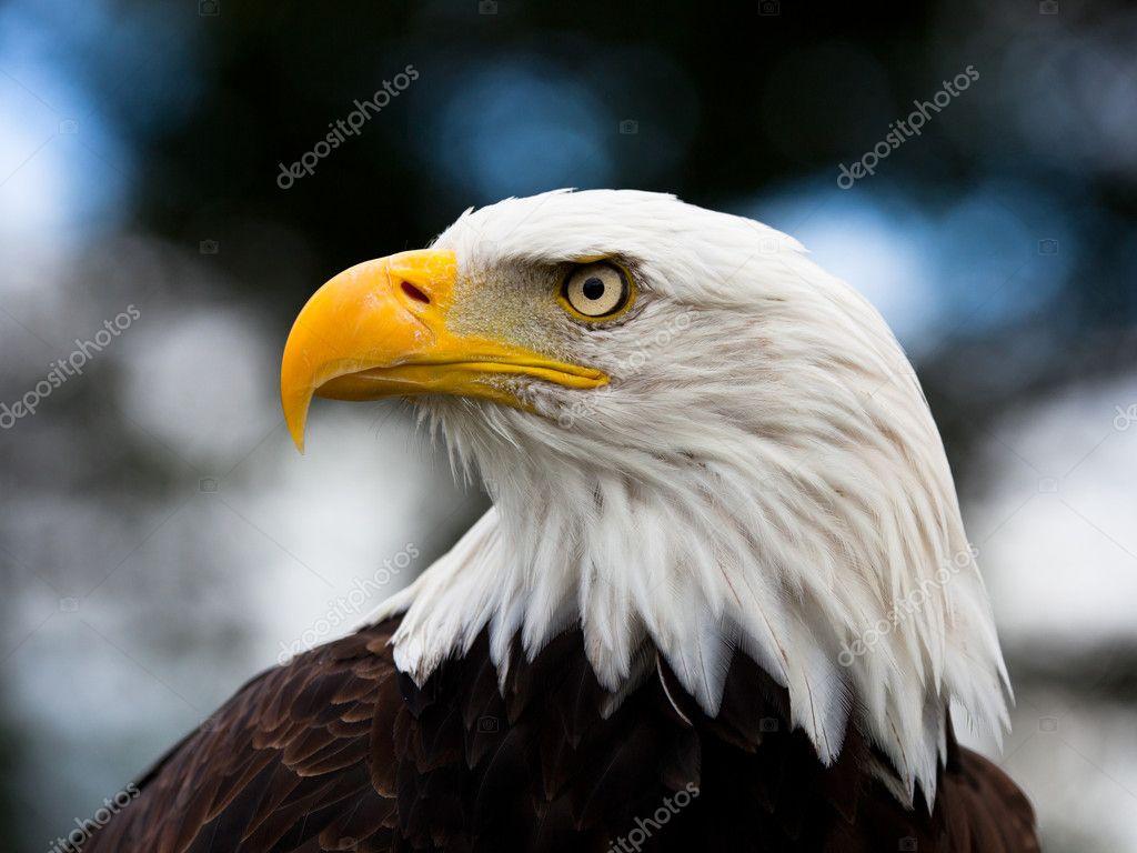 águila #hashtag