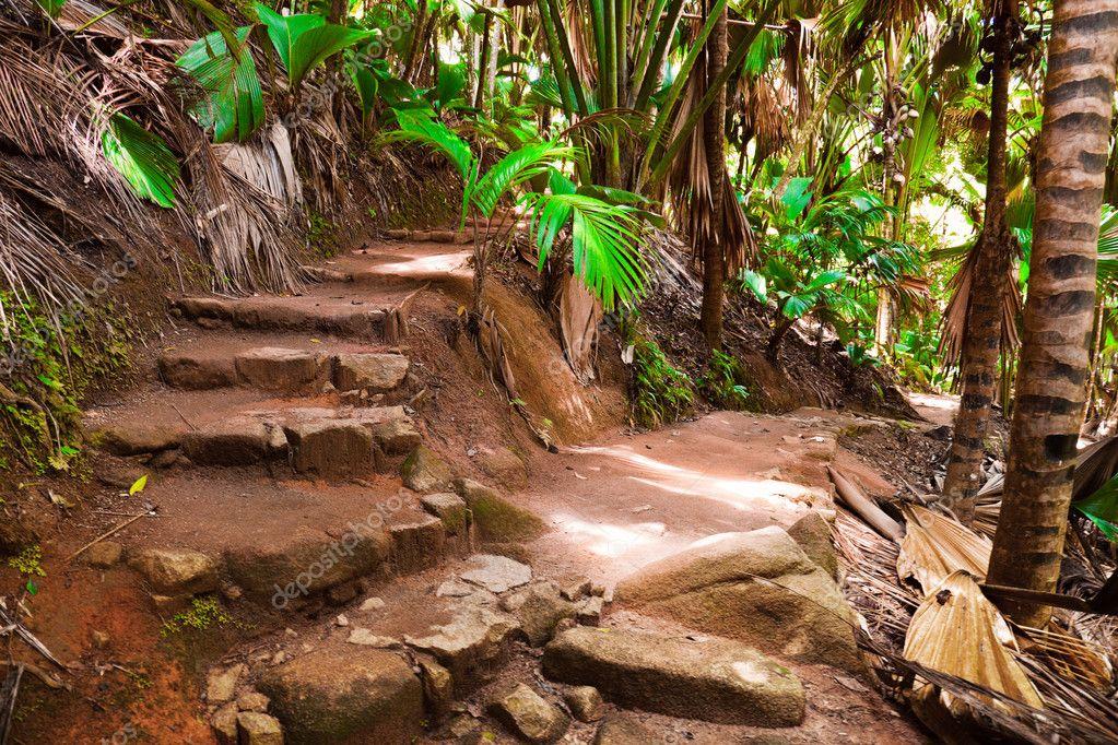 Pathway in jungle, Vallee de Mai, Seychelles